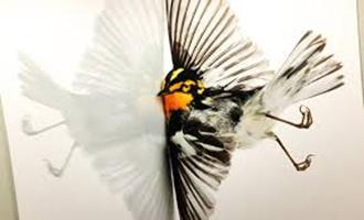 Window Collisions - Window decals deter birds