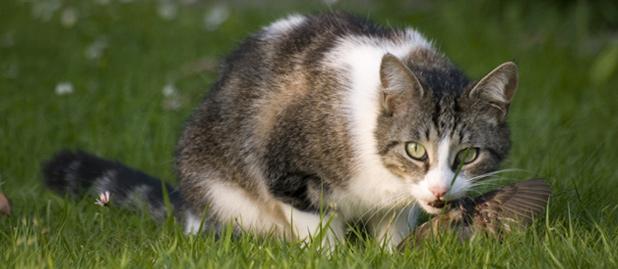 cat-eating-bird_Gaetan-Priour,5Jun2007