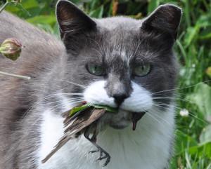 cat-and-bird_Zanna-Holstova_SS[1]